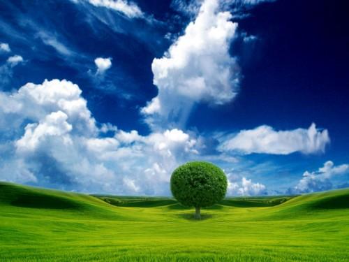 albero vita1.jpg