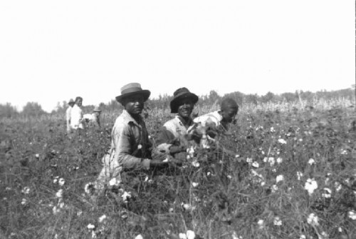 cotton_pickers_50s.jpg