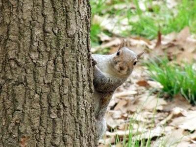 scoiattolohb.jpg