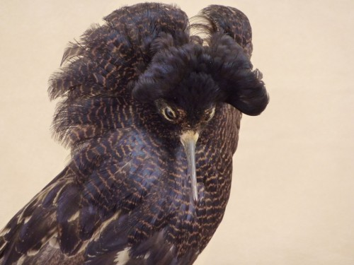 intermezzo venatorio 2: l'uccello combattente