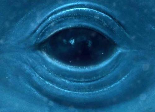 balena_occhio.jpg