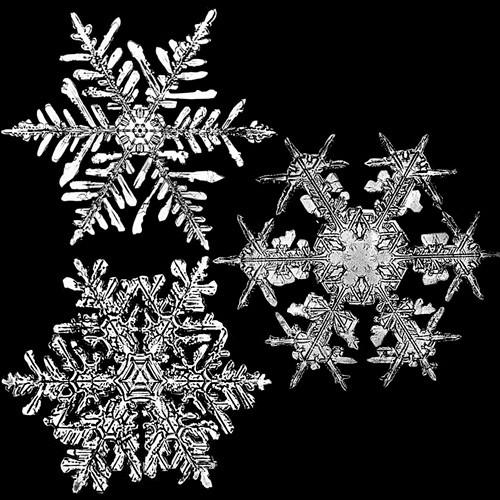 snowflakeswb2.jpg